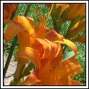 Flowerst
